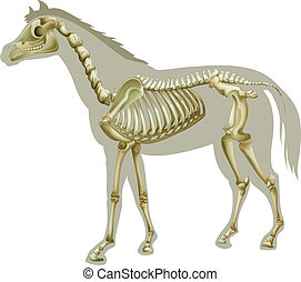 Horse Skeleton - Illustration of a horse skeleton - side...