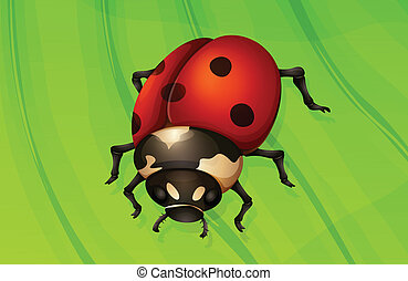 Ladybug life cycle - Illustration of a ladybug life cycle -...