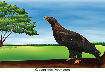 A big bird - Illustration of a big bird