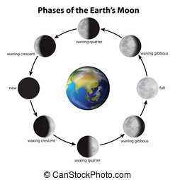 Phases of the Moon - Illustration showing the phases of the...