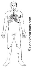 Respiratory System - Outline illustration of the human...