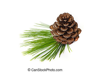 Pine cones. - Pine cones with branches isolated on white...