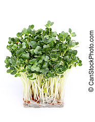 Radish sprouts isolated on white background