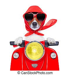 motocicleta, perro, verano, perro