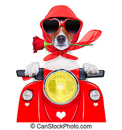 motorcycle valentine dog - motorcycle dog driving a...