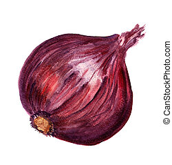Red onion - Watercolor image of red large onion isolated on...