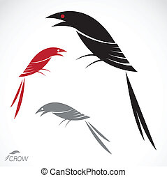 Vector image of an crow on white background