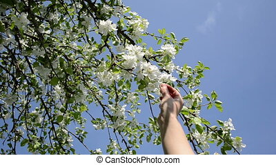 woman bloom apple tree