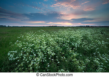 sunset over meadow with wildflowers