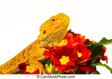 Be my Valentine, Dragon with Flowers