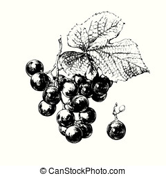 Vine of Grapes - Hand drawn vine of grapes with leaf