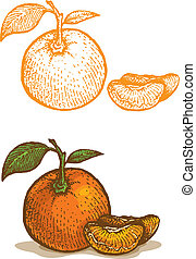 Illustrations of tangerine in retro style