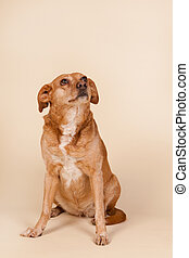 Cross breed dog sitting at the floor