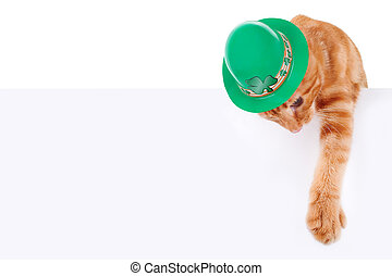 St. Patrick's Day cat and sign or banner