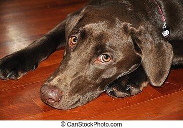 Close-up of Dog with Sad Eyes