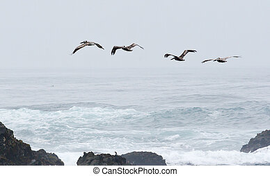 Birds Flying Over the Waves and through the Fog - Birds...