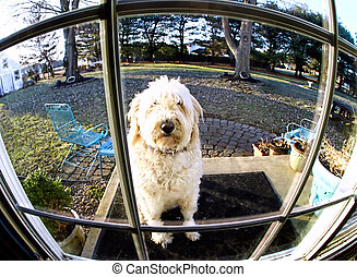 Dog through Fish-eye Lens - Dog patinetly waits to come...