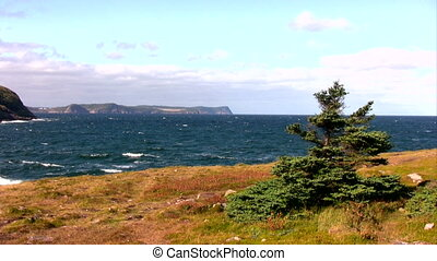 Fall on Cost Line of Newfoundland, - Typical look of...