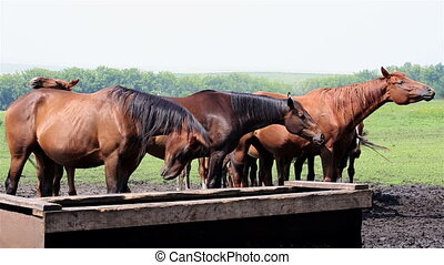 Horses nod their heads in unison saved from annoying insects...