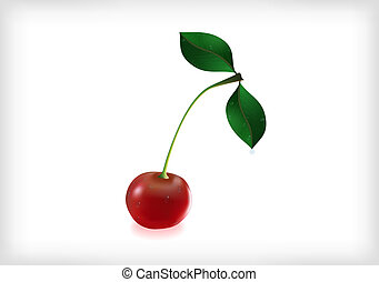 Cherry with leaves and waterdrops - Illustration of cherry...