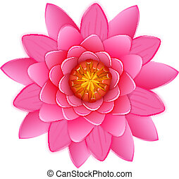 Beautiful pink lotus or waterlily flower isolated -...