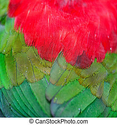 Lory Keet feather background