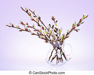 Branches of the pussy willow with flowering bud in jug
