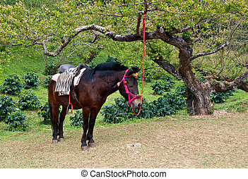 brown horse with rider equipment . - brown horse with ridier...