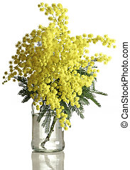 Mimosa Acacia Dealbata Cutout - Bouquet of Silver Wattle...