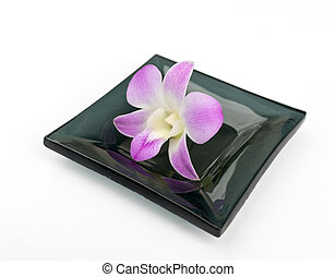 Purple Orchid Flower on dish