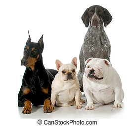 four different breeds sitting isolated on white background -...