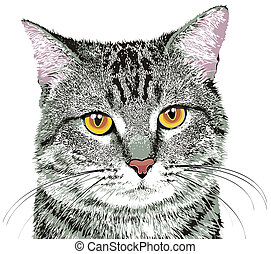 cat - gray tabby cat with yellow eyes on white background