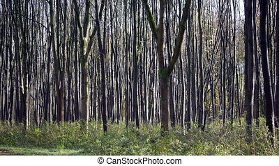 pattern of young trees in forest
