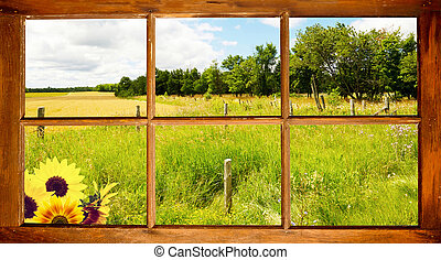 Summer field view. - Landscape. Field and forest with a...