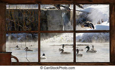 Winter pond morning view. - Ducks on a steamy open pond on...