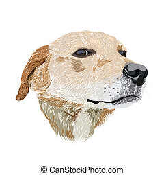 Dog head - hand drawn illustration