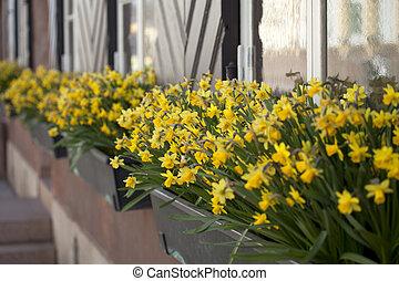 Flowers on window board