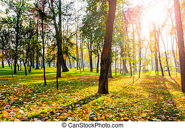 Sun threw trees - Autumn sun through trees in a park with a...