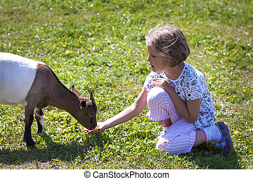 Feeding goat 8 - Little girl (6 years old) feeding goat on...