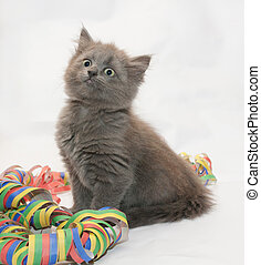 Fluffy gray kitten sitting looking up, coiled serpentine on...
