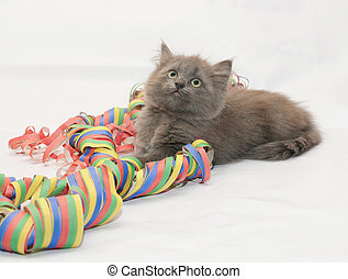 Fluffy gray kitten playing with serpentine on white...