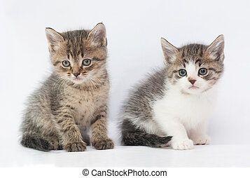 Two fluffy kitten sitting, looking in disbelief, on white...