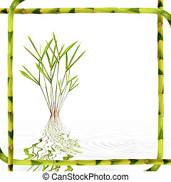 Bamboo Leaf Beauty - Bamboo leaf grass with reflection in...