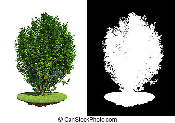 Green Bush Isolated on White Background - Green Bush on...