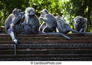 Monkey, Ubud Bali Indonesia