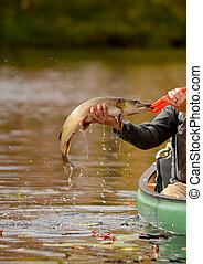 Fishing in a canoe for a pike fish - man catching a pike...