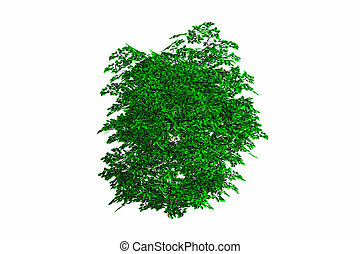 Isolated Bush - Bright green bush isolated against a white...