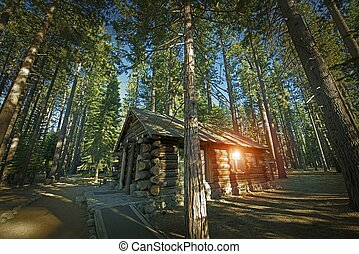Aged Forest Cabin - Aged Forest Log Cabin Somewhere in...