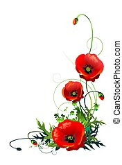 Poppy Flowers Isolated - Blooming Red Poppy Flowers Isolated...