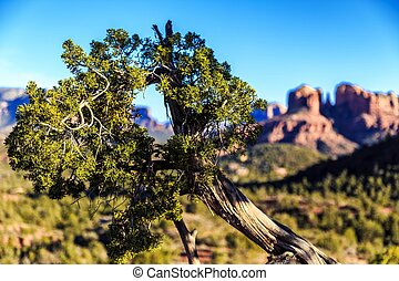 Desert Tree - A tree thrives in the hot red rocks of the...